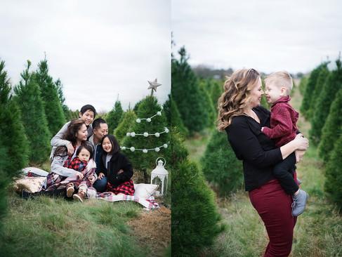 tree-farm-collage-sml.jpg