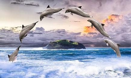 dolphin-1548405_1920.jpg