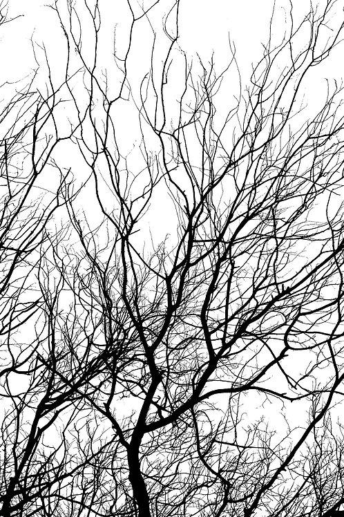 Black Border Trees