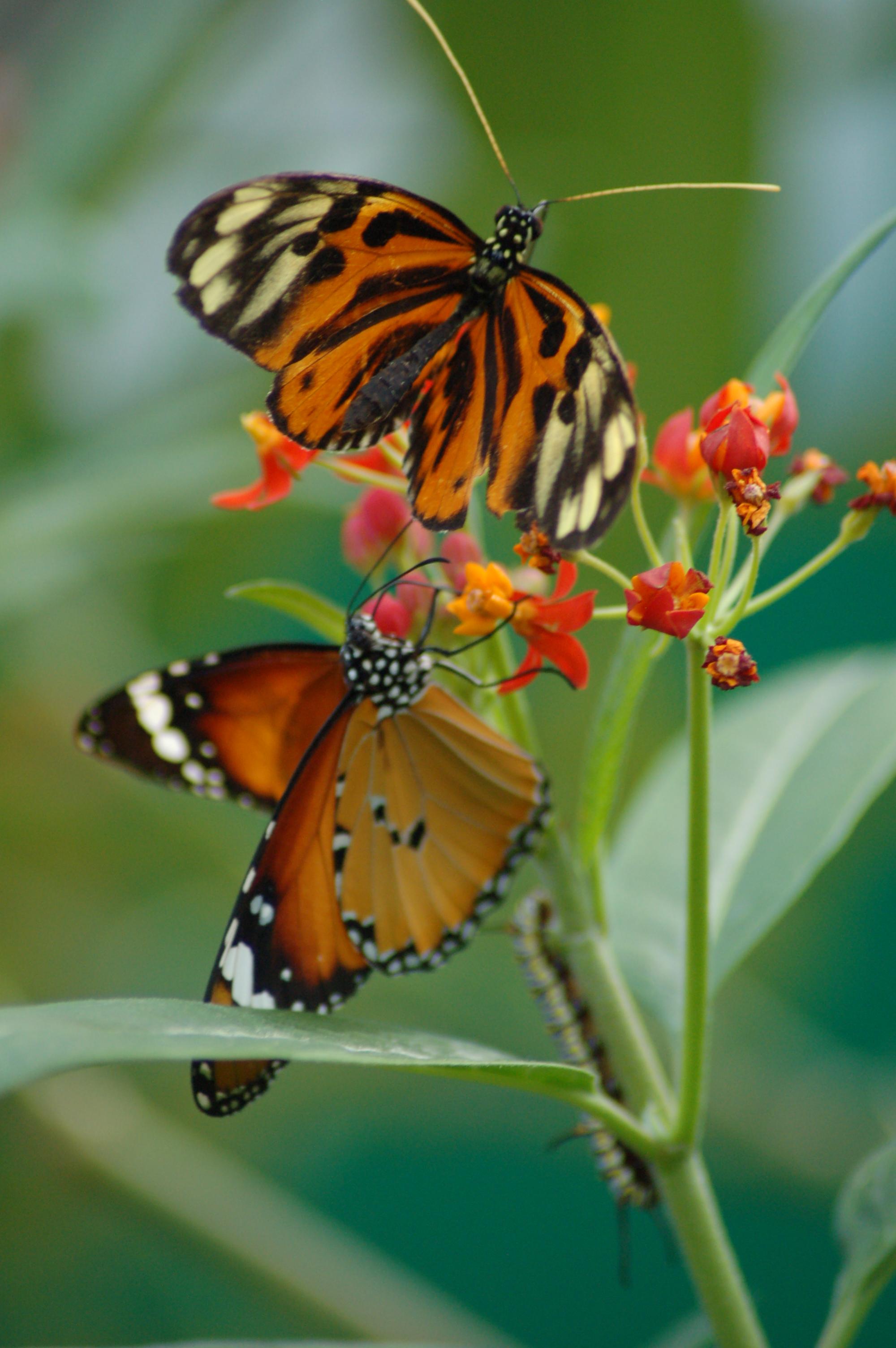 Natuur - Vlindertuin