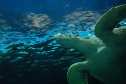 Natuur - Sea Aquarium
