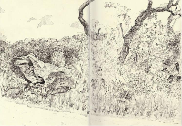 'Fallen Tree Near Kenwood', double page