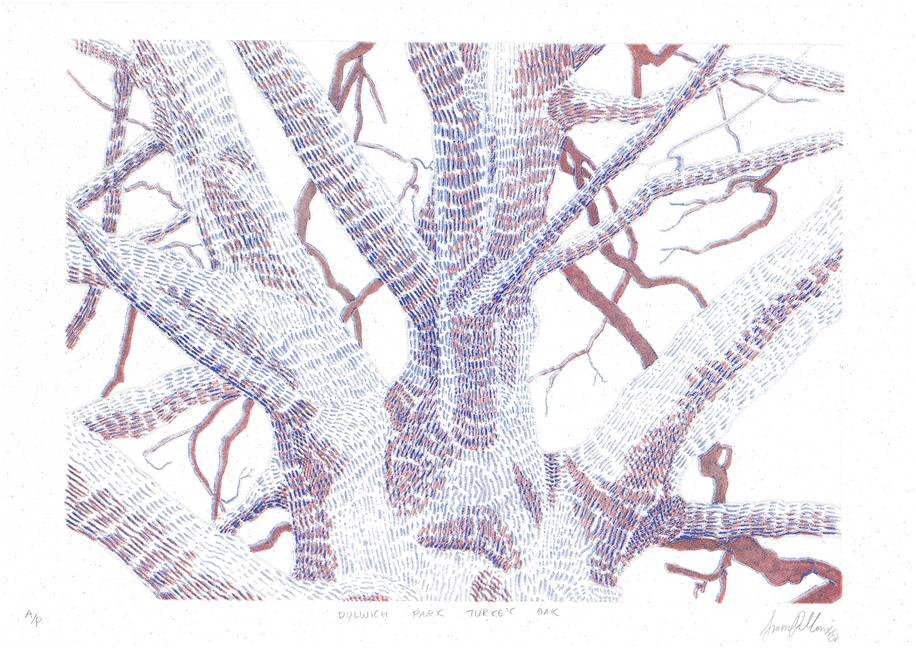 Dulwich Park Turkey Oak Riso Print Scan.