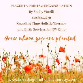 placenta Instagram Post.jpg