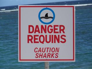 Requins à la réunion : paroles de spécialistes
