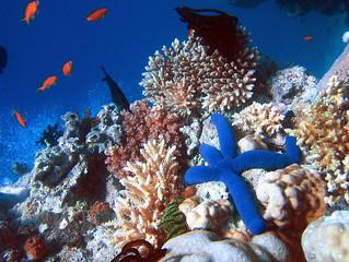 La 1 ère zone de protection marine au Cambodge !!!