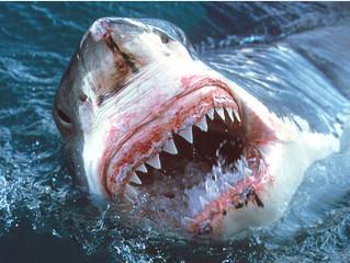 Colgate Squale…. Le fluor des requins !