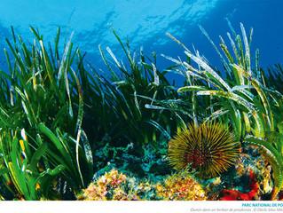 Le snorkeling, nouveau sport sous-marin en vogue