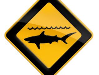 Vigie requins : un nouveau job pour sécuriser les cours de surf à la Réunion