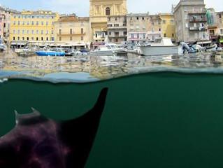 Protection étendue à dix espèces de requins et de raies