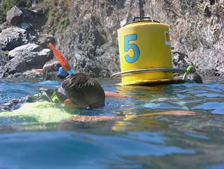Les sentiers sous-marins ont le vent en poupe...