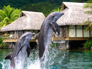 Vous voulez nager avec les dauphins ??