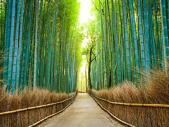 A Winding Path Through a Thick Forest of Mixed Bamboo and Trees as Sunlight Beams Through the Tree Tops