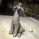 Cedric the Poodle