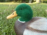 duck decoy flocking