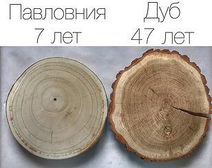 pavlovnia-paulownia-fast-grow-tree