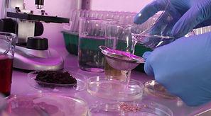 pavlovniya-laboratoriya-semena-1.jpg