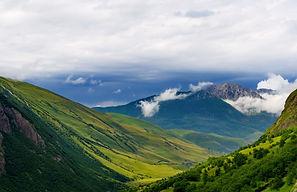 severniy-kavkaz-paulownia.jpg