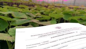 Сертификация саженцев Павловнии #1. Зачем она нужна? Частное выращивание.