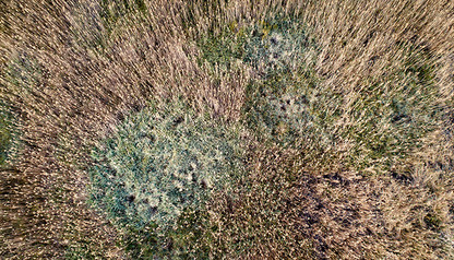 FROM ABOVE | MARSH PATTERN by Martin Osner