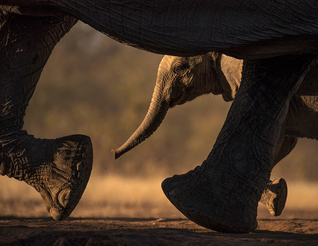 KEEPING UP WITH MOM by Greg du Toit