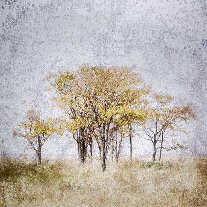 AFRICAN CRYSTAL   ETOSHA TREES by Fumi Hirai