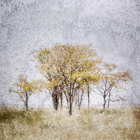 AFRICAN CRYSTAL | ETOSHA TREES by Fumi Hirai