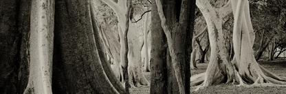 Ndumo Forest | Koos van der Lende | Limited Edition (25)