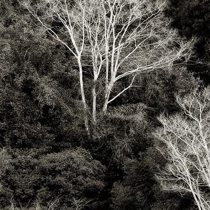 Ivory | Martin Osner