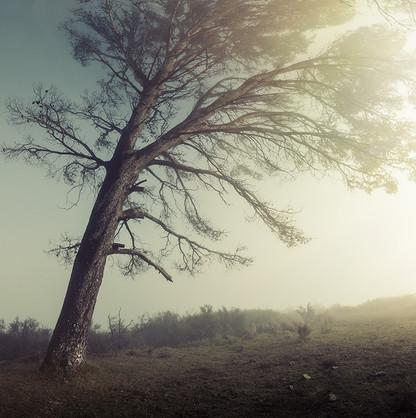 SERAPHIC   MISTY RIDGE by Martin Osner