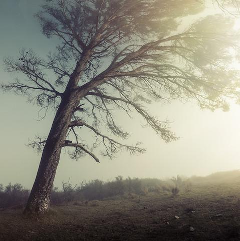 SERAPHIC | MISTY RIDGE by Martin Osner