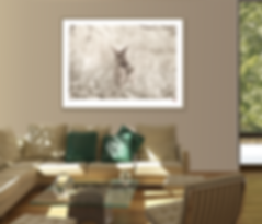 An example of what a photographic gallery print can look like when used in a modern interior.