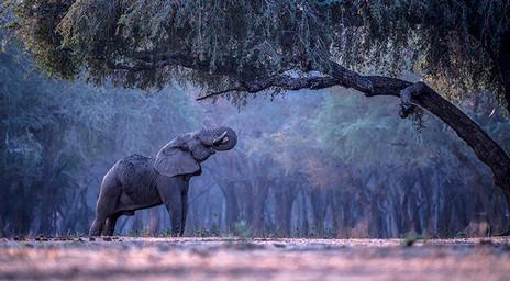 ELEPHANT FOREST