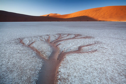 The Tree | Hougaard Malan | Limited Edition (8)