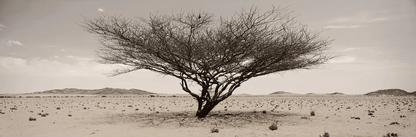 Arid wilderness No.1 | Koos van der Lende | Limited Edition (25)