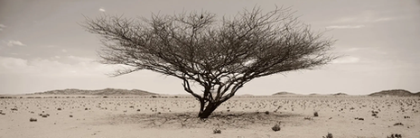 Arid wilderness No.1 | Koos van der Lende | Limited Edition (25)