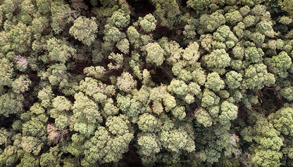 FROM ABOVE | CANOPY by Martin Osner
