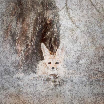 AFRICAN CRYSTAL | CAPE FOX by Fumi Hirai