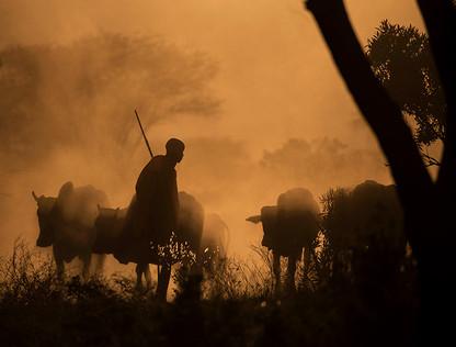MAASAI SHEPHERD