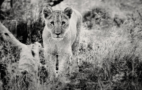 AFRICAN PRIDE # by Martin Osner