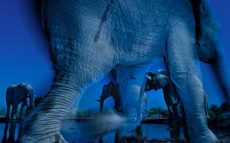 ESSENCE OF ELEPHANTS by Greg du Toit
