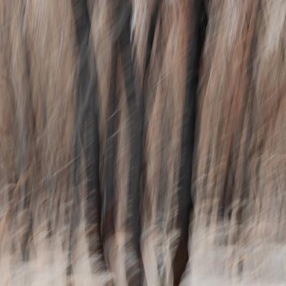 Fire & Ash No.5 | Martin Osner