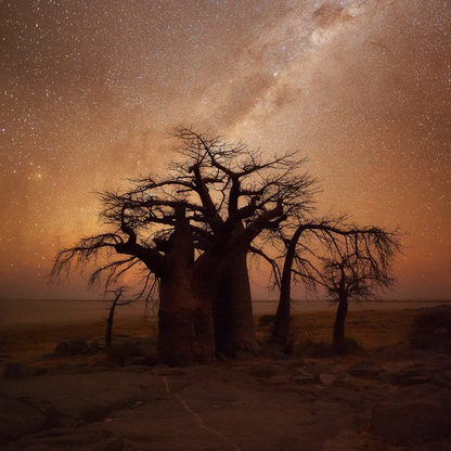 African Nights | Hougaard Malan | Limited Edition (8)