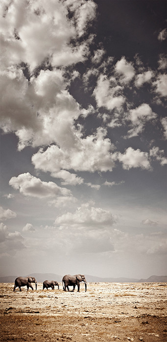 CROSSING AT AMBOSELI by Klaus Tiedge