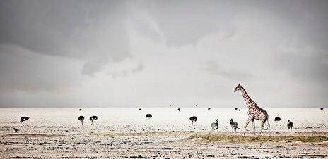 HARMONY by Klaus Tiedge