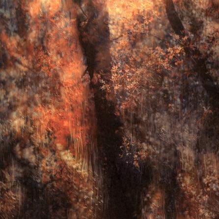 Secret in Eden #1 | Martin Osner