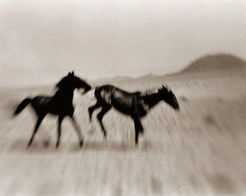 WILD HORSES OF THE NAMIB #5