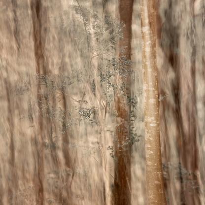 Forest of Mystique | Samantha Lee Osner | Limited Edition (25)