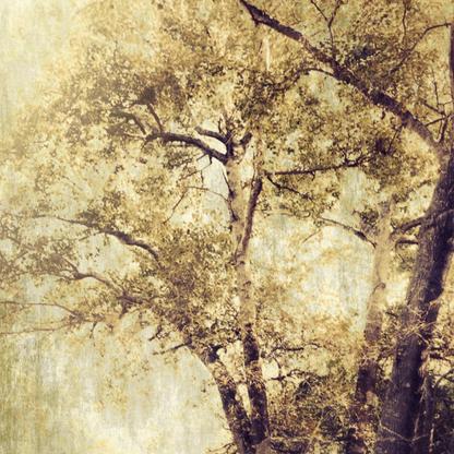 Contemplation | Martin Osner