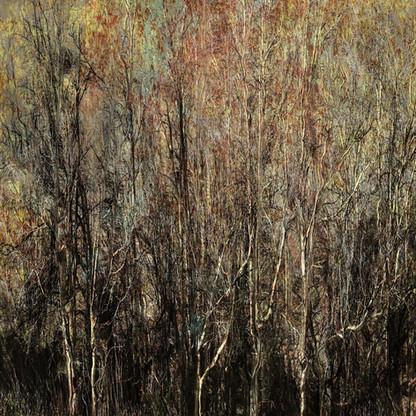Carbon Woodlands | Martin Osner |  Ltd Ed (35)